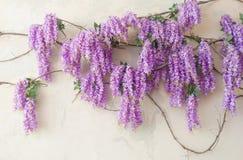 Belle glycine lilas artificielle Photo stock