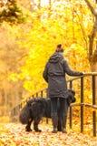 Belle grande Terre-Neuve avec le propriétaire sur une promenade d'automne dans a Images libres de droits