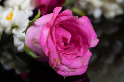 Belle guirlande de jasmin des fleurs avec la rose de rose Photo stock