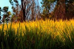 Belle herbe image stock
