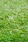 Belle herbe verte images stock