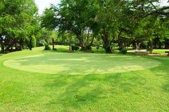 Belle herbe verte Photos libres de droits