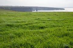 Belle herbe verte Images libres de droits