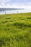 Belle herbe verte de kerry Photos libres de droits