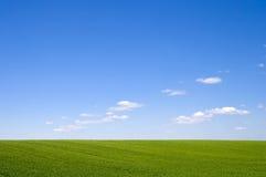 Belle herbe verte et ciel bleu Photographie stock