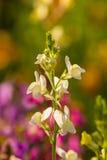 Belle horticulture de cinglement dans le jardin Paysage vibrant d'été photo stock
