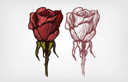 Belle illustration rose Photographie stock libre de droits
