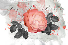 Belle illustration rose Photo stock