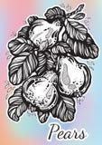 Belle illustration tirée par la main des poires entourées par le feuillage Illustration admirablement détaillée de vecteur dans l illustration stock