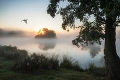 Belle image automnale de paysage des oiseaux volant au-dessus de la La brumeuse Photo stock