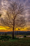 Belle image d'horizontal avec la silhouette d'arbres Photo libre de droits