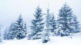 Belle image de l'hiver landscape banque de vidéos