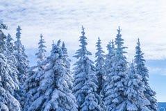 Belle image de l'hiver landscape Image stock