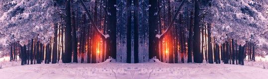 Belle image de l'hiver landscape Photos libres de droits