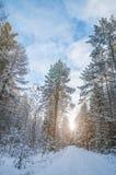Belle image de l'hiver landscape Photo libre de droits