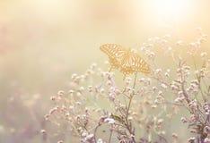 Belle image de papillon de vintage Photos stock