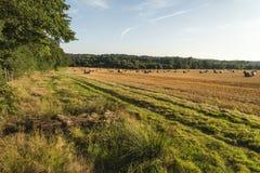 Belle image de paysage de campagne des balles de foin dans le fie d'été Images libres de droits