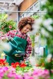 Belle jeune femme arrosant de diverses plantes d'intérieur mises en pot photos stock