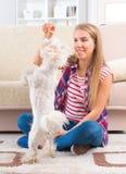 Belle jeune femme formant son chien Photos stock