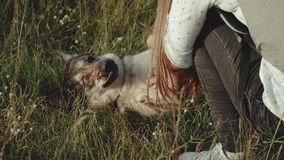 Belle jeune femme heureuse frottant son chien affectueux dans l'heure d'été de champ Promenade femelle avec son chien mixbreed le banque de vidéos