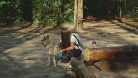 Belle jeune femme heureuse frottant son chien affectueux dans la forêt banque de vidéos