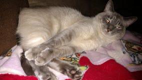 Belle kiciunia śpiąca Zdjęcie Stock