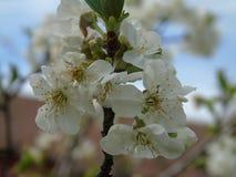 Belle légende de quelques fleurs de ressort Photo libre de droits