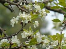 Belle légende de quelques fleurs de ressort Photos libres de droits