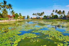 Belle lagune de lotus dans Candidasa, Bali Photographie stock