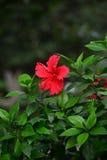 Belle lilly fleur Images libres de droits