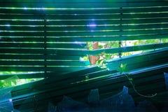 Belle luce ed edera da una finestra Fotografia Stock Libera da Diritti