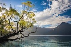Belle lumière de matin chez Wilson Bay, NZ Photos stock
