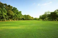 Belle lumière de matin en parc public avec le champ d'herbe verte Photos stock
