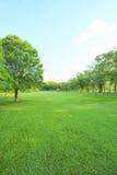 Belle lumière de matin en parc public avec le champ d'herbe verte photo stock