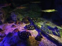 Belle lumière sous-marine colorée de l'eau Photographie stock libre de droits