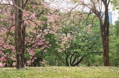 Belle lumi?re de matin en parc public photographie stock libre de droits
