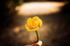 belle main de fleur Photo libre de droits