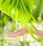 Belle main femelle sur le fond vert Photo libre de droits
