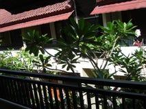 Belle maison de Bali pendant le matin Image stock
