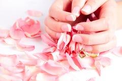 Belle mani che tengono i petali di rosa Immagini Stock
