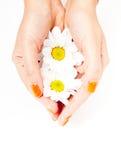 Belle mani con i fiori bianchi Fotografia Stock