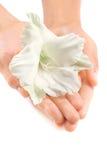 Belle mani della donna con un fiore tropicale bianco Immagini Stock Libere da Diritti