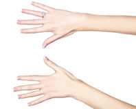 Belle mani femminili. Fotografia Stock