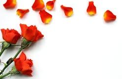 Belle maquette de roses pour des présentations Vue supérieure de lieu de travail de bureau Photographie stock libre de droits