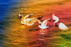 Belle mer de mouette Photos libres de droits