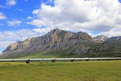Belle montagne con l'oleodotto lungo Dalton Highway famoso, conducente da Fairbanks a Prudhoe Bay, l'Alaska, U.S.A. fotografia stock