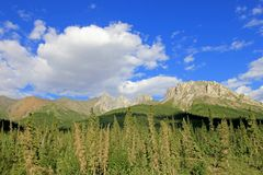 Belle montagne lungo Dalton Highway famoso, conducente da Fairbanks a Prudhoe Bay, l'Alaska, U.S.A. fotografia stock libera da diritti