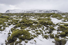 Belle mousse molle sur des gisements de lave avec le mountainscape à l'arrière-plan Photo stock