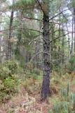 Belle mousse sur un plein cadre d'arbre Photographie stock