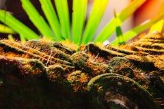 Belle mousse verte dans le sunglight image stock